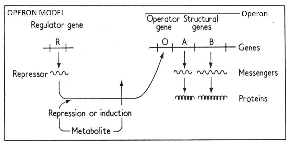 Meilensteine der Geschichte der mRNA (Impfstoffe) - Teil 1